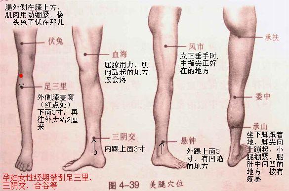 刮痧美腿按摩穴位图