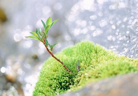 春季养生做好5件事 一年少生病(图片来源于百度搜索)