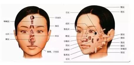 脸部按摩穴位图
